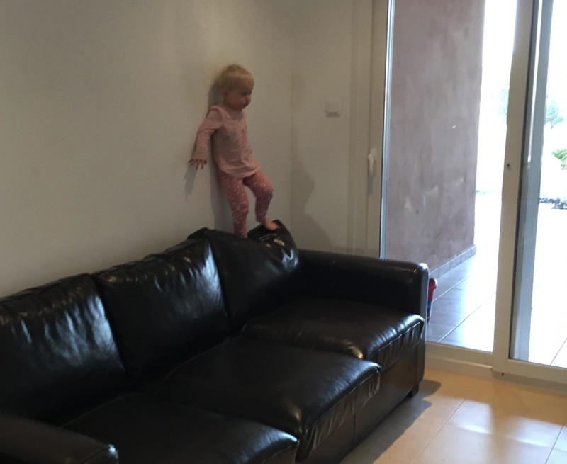 Zara climbing the sofa